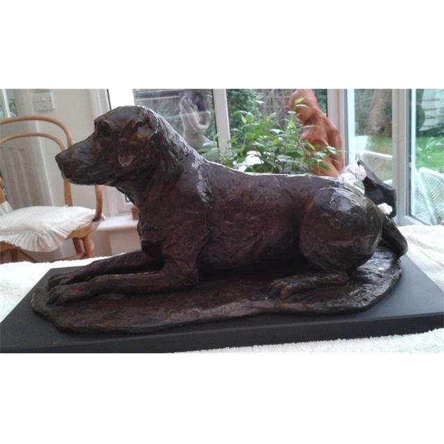 Milo, Labrador retriever, a dear friend and companion